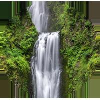 Naturopathic Medicine - healing power of nature