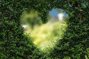 Heart shape cut out in a wall of trees